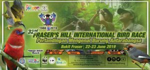 fraser hill international bird race