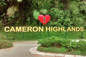 I love Cameron Highland